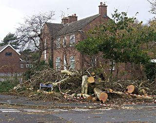 Storm damaged tree felled at corner of Timms Lane