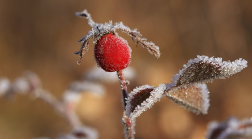 Frost Close Up