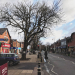 Sefton Council Call For Meeting Over Village Trees